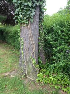 Ivy-Swag-Tree