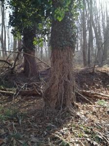 Ivy Swag Tree