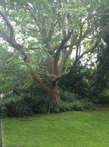 MSP Tree