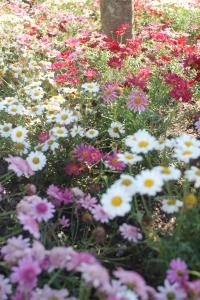 Galway Flowers