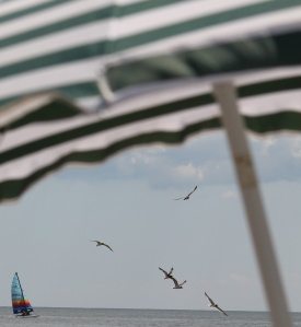 Sail Birds Umbrella