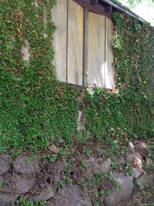 Ivy Wall Stone 2