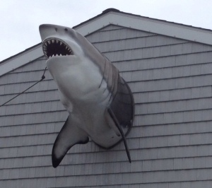 Sharky Bldg 2