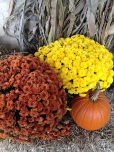 Autumn Nature Display