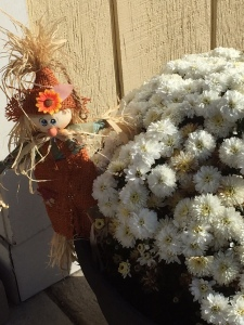 Mini Scarecrow Flowers